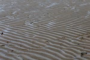 Tidal sands